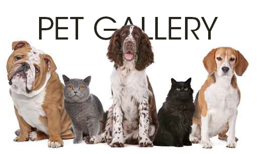 Animal Health Veterinary Clinic Pet Gallery