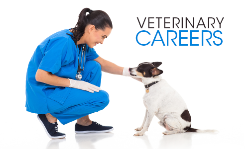 Animal Health Veterinary Clinic Careers