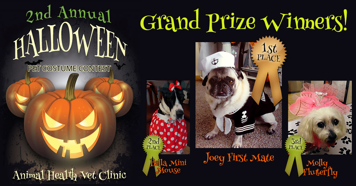 Grand Prize Winners - Joey, Bella and Mollie